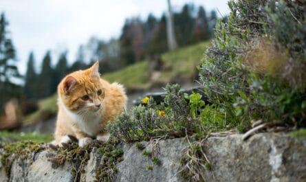 empecher-chat-faire-besoins-jardin