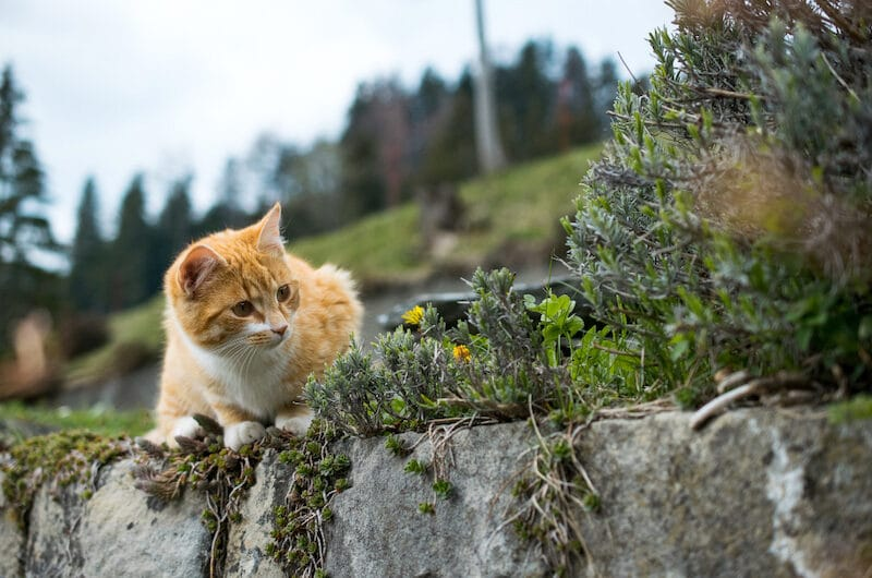 Dressage de Chat : l'empêcher de faire ses besoins dans le jardin