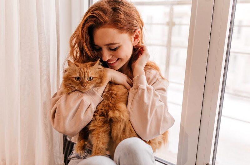 Un Chat qui Miaule : tout savoir sur les miaulements du félin