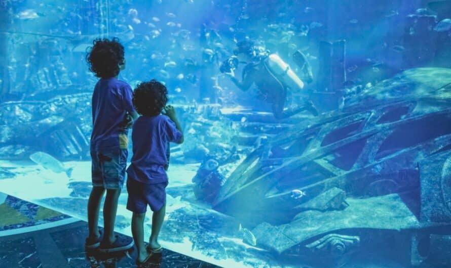 Aquarium Dubaï : Découvrez le plus grand aquarium de la région